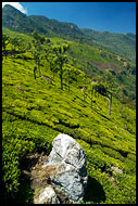 South India - Ooty