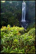 Kenya - Thomson's Falls