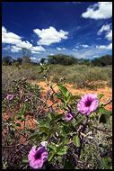 Kenya - Nature Of The Suguta Valley