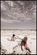 Senegal - Salt Harvesting